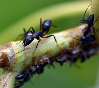Bug & Ants