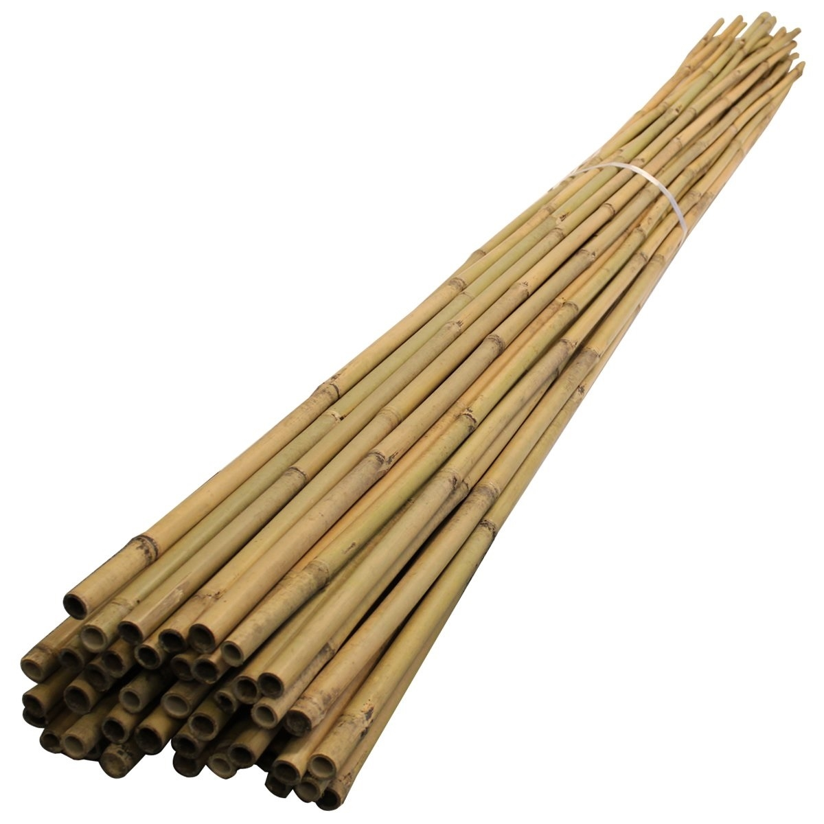 8ft Bamboo Canes - Pack of 10